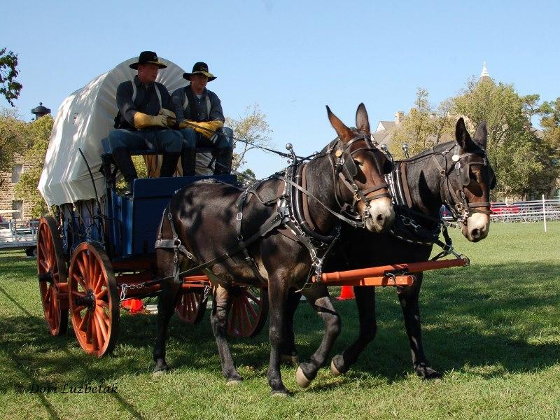 Men riding a wagon